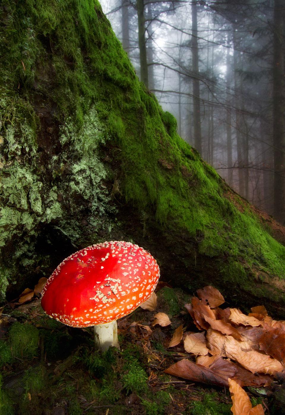 Il Parco delle Foreste Casentinesi